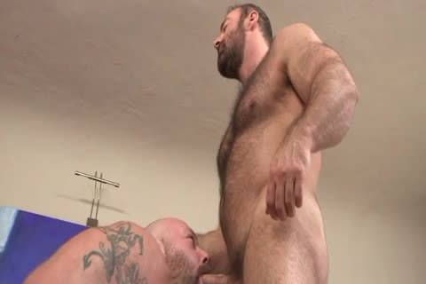 hairy Daddies On The daybed