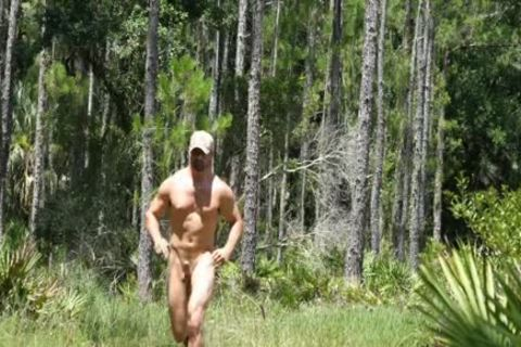 large Timber In The Woods